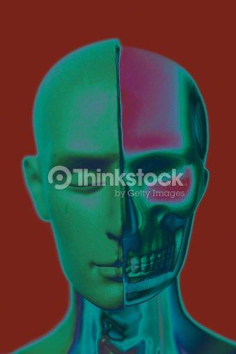 Human Head Anatomy Model Stock Photo Thinkstock