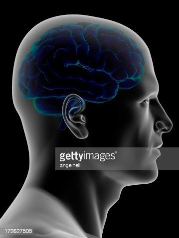 Human head with the brain inside