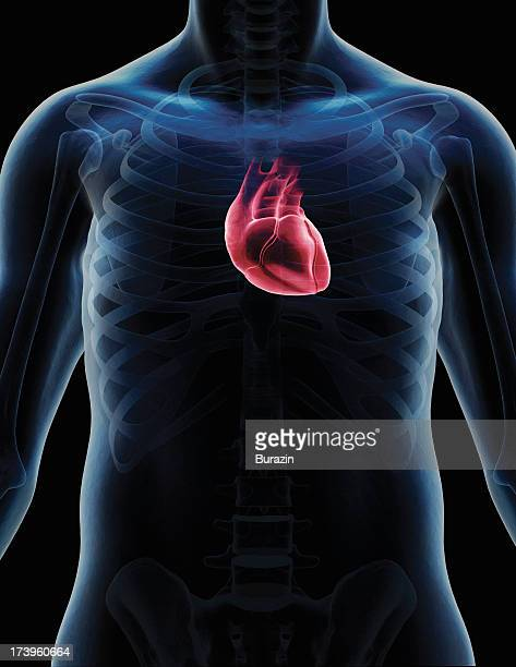 Human heart digital composite