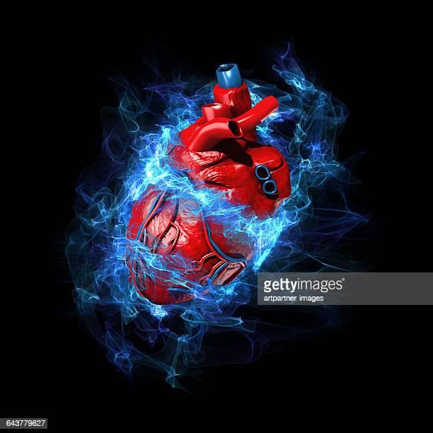 Human Heart in Stress