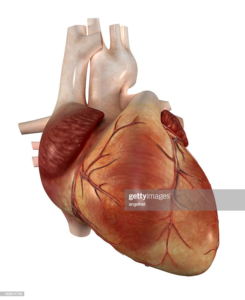 Human Heart Stock Photo | Getty Images