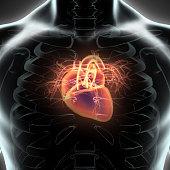 Human Internal Organic - Human Heart, medical concept.