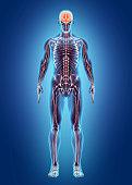 Human Internal System - Nervous system, medical concept.