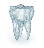 Human molar Tooth, wire model, 3d illustration
