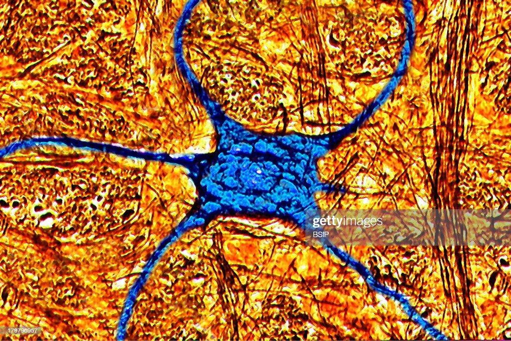 Human Neuron Digital Light Microscope