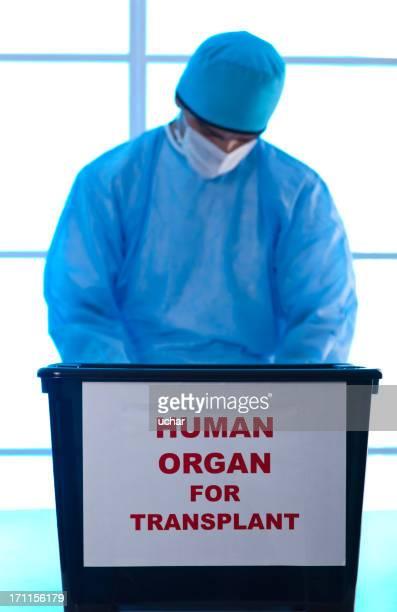 Menschliche organ für transplant