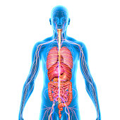 The human body is the entire structure of a human being and comprises a head, neck, trunk (which includes the thorax and abdomen), two arms and hands and two legs and feet. Every part of the body is c