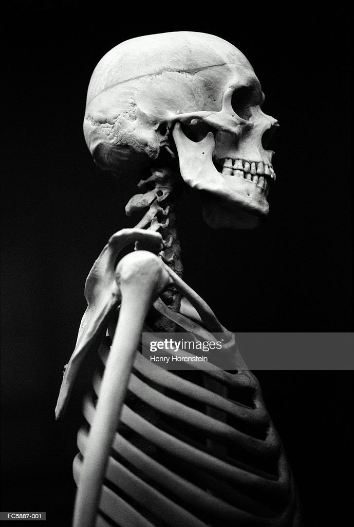 human skeleton profile - more information - rethink wasteni, Skeleton