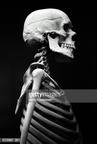 human skeleton profile stock photo | getty images, Skeleton