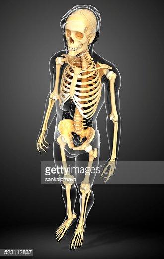 human skeleton side view stock photo | thinkstock, Skeleton