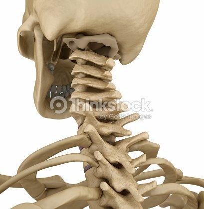 Esqueleto Vista Parte Trasera De La Espina Dorsal Humano Ilustración ...