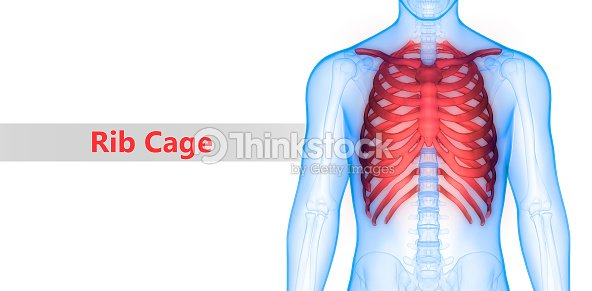 Menschliches Skelett System Brustkorb Anatomie Stock-Foto | Thinkstock