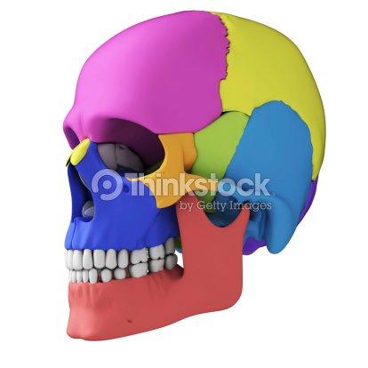 Menschlicher Schädel Anatomie Stock-Foto | Thinkstock