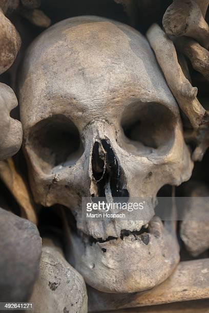 Human skull nestled amongst various bones, close-up