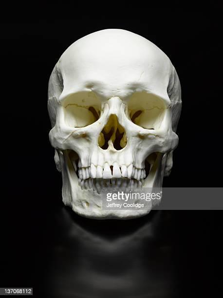 Human Skull on Black