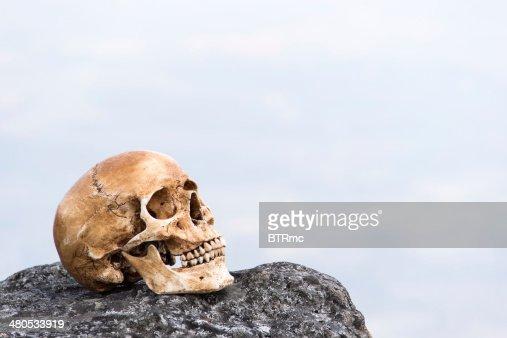 human skull on the rock : Stockfoto
