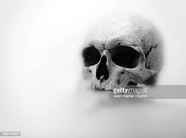 Human Skull Over White Background