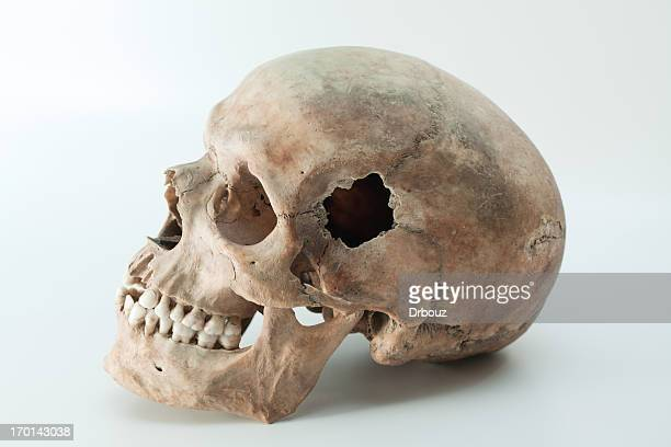 human skull stock photos and pictures | getty images, Skeleton
