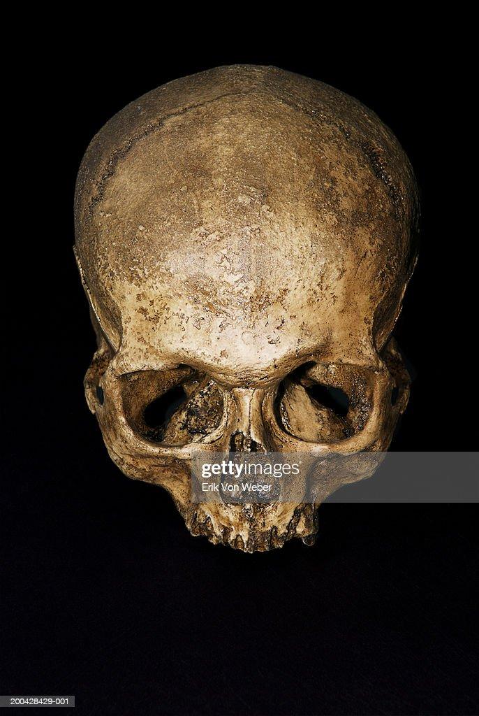 Human skull : Stock Photo