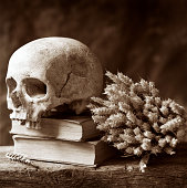 Human Skull Resting on Books, Sepia Toned
