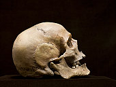 Human skull, side view, studio shot
