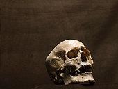 Human skull, studio shot