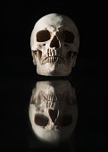 Human skull with reflection