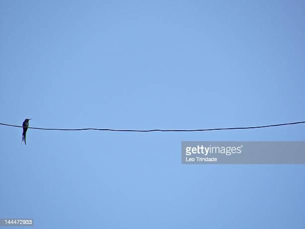 Humming bird on wire