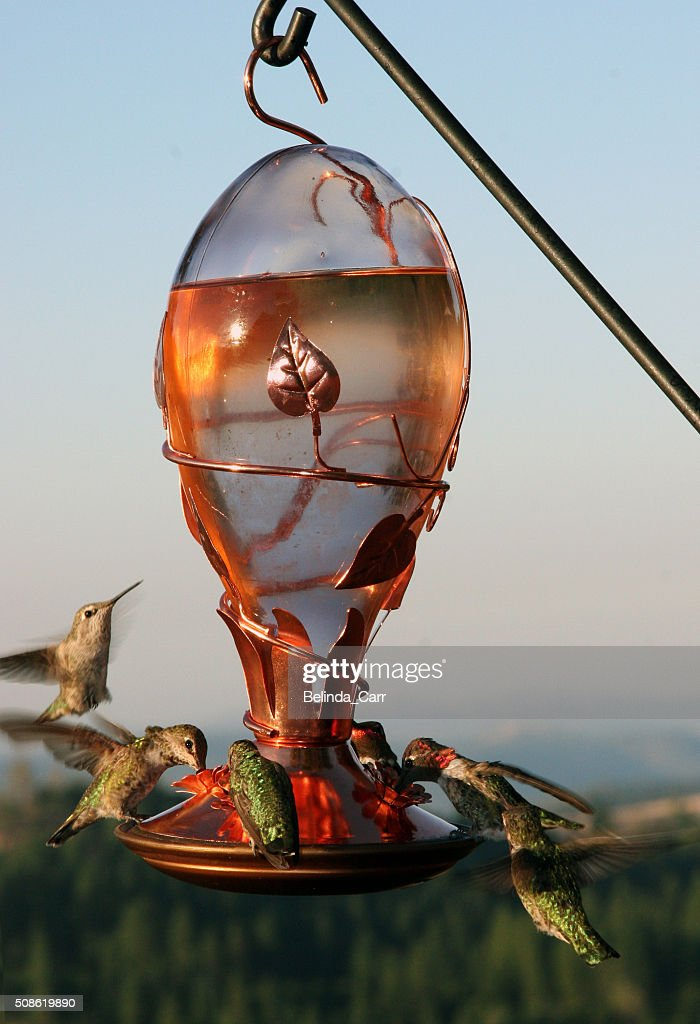 Hummingbird Feeder : Stock Photo