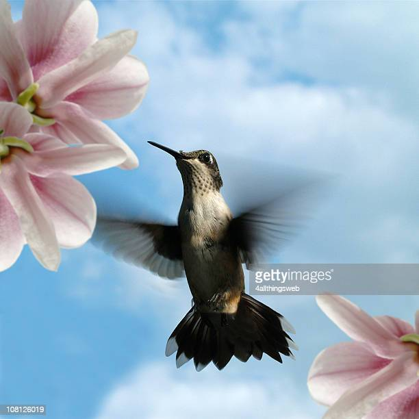 Kolibri im Flug mit Blumen und blauen Himmel Hintergrund
