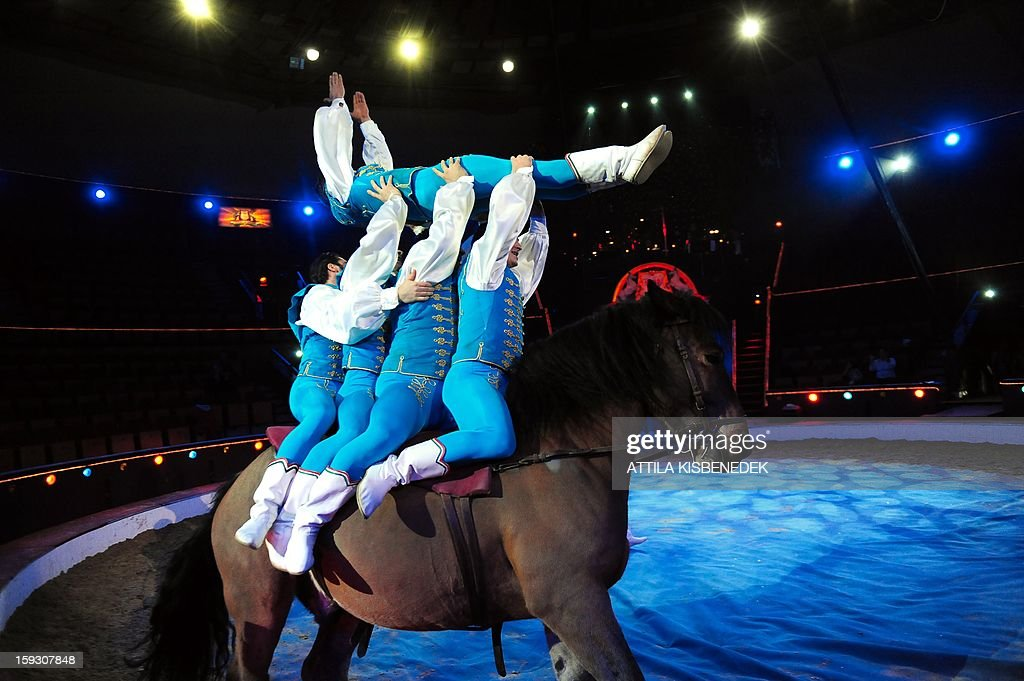 Hungarian animal acrobat and animal trainer Forian Richter and his team perform on circus floor in Budapest on January 11, 2013 during a rehearsal of a new production, title the 'Hungarian circus stars'. The premiere will be held on January 12.
