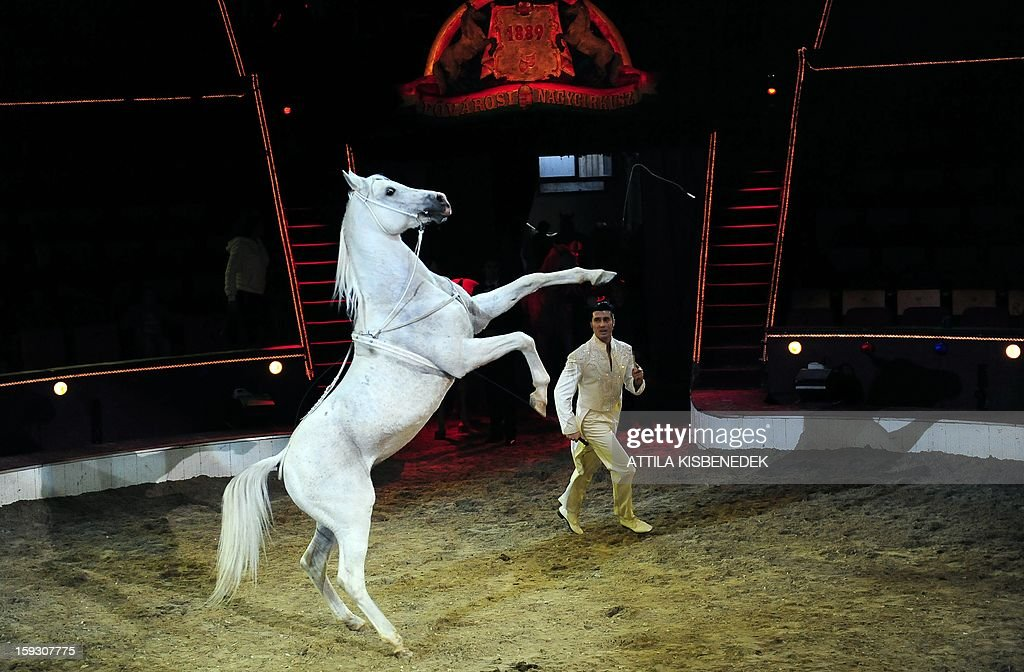 Hungarian animal trainer Florian Richter and his horse perform on circus floor of the Grand Circus of Budapest on January 11, 2013 during a rehearsal of a new production, titled the 'Hungarian circus stars'. The premiere will be held on January 12. AFP PHOTO / ATTILA KISBENEDEK