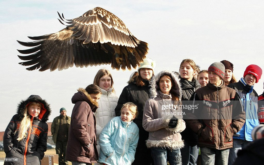 Hungarian children watch a white-tailed eagle (Haliaetus Albicilla) in Hortobagy, some 130 kms east of Budapest, 24 Januray 2008. Eleven eagles were found poisoned by unidentified people in the area. Four survived and three were freed today. Hungary is home to more than 60% of the EU population of Imperial Eagles