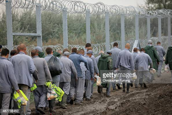 Hungarian prisoners arrive at the Hungarian and Serbian border believed to be part of a work detail to finish the razor wire border fence on...