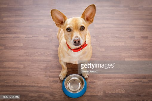 hungry dog with food bowl : Stock Photo