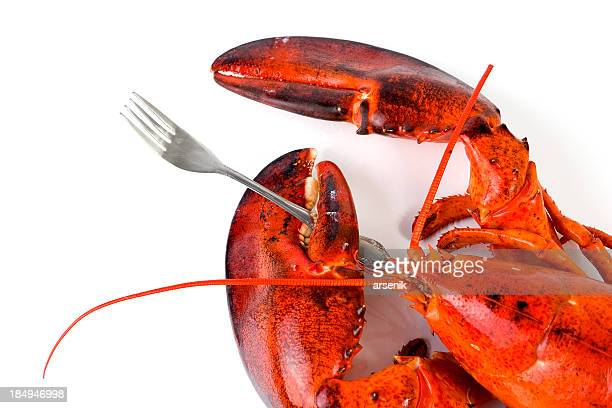 Hungry lobster