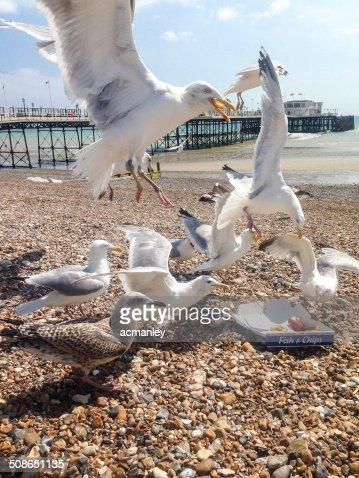 Hungry seagulls : Stock Photo