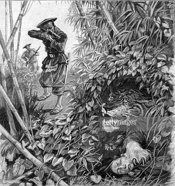 Hunt for ManEating Tiger Vietnam 1904