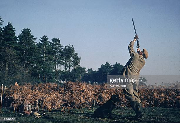 A hunter and his gun dog taking part in an Autumn game shoot in the English countryside Original Publication Picture Post 6779 Days Of Gold pub 1953