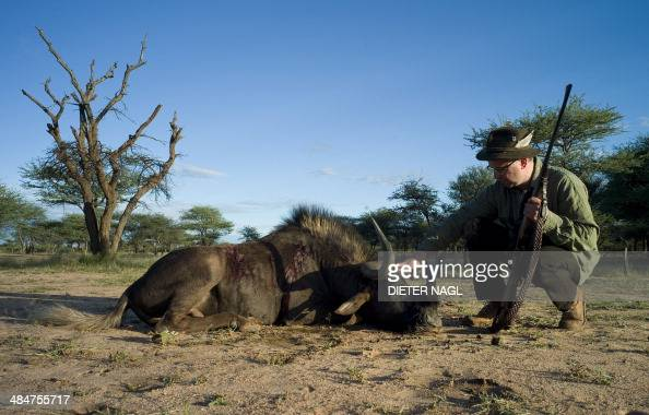 A hunter is pictured with his prey a black wildebeest at the Hamakari Hunting Farm near Okakarara some 300 km north of Windhouk on April 13 2014 AFP...