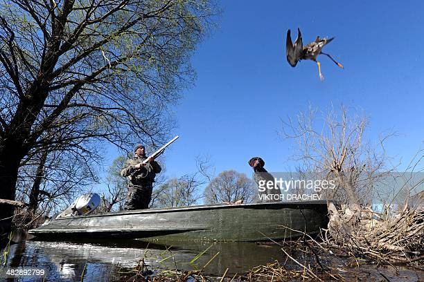 A hunter prepares to shoot a wild duck on Pripyat's river not far from the village of Veresnitsa some 260 km south of Minsk on April 5 2014 AFP PHOTO...