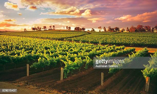 Hunter Valley wine region