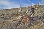 Bull elk harvested in Montana