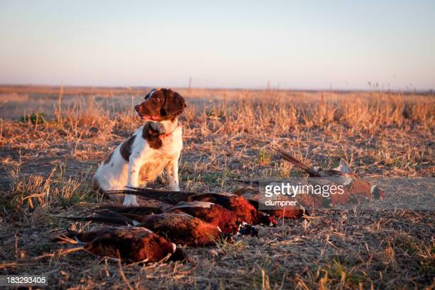 Hunting Dog with Pheasants