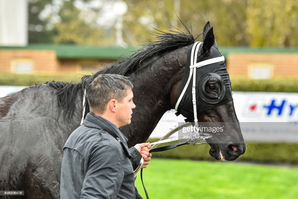 Hunting Hill after winning thebigscreencompany.com.au Handicap at Mornington Racecourse on September 13, 2017 in Mornington, Australia.