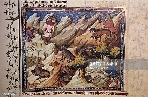 Hunting scene illustration from the Livre de Chasse medieval treatise on hunting by Gaston III Count of Foix known as Gaston Phoebus miniature...