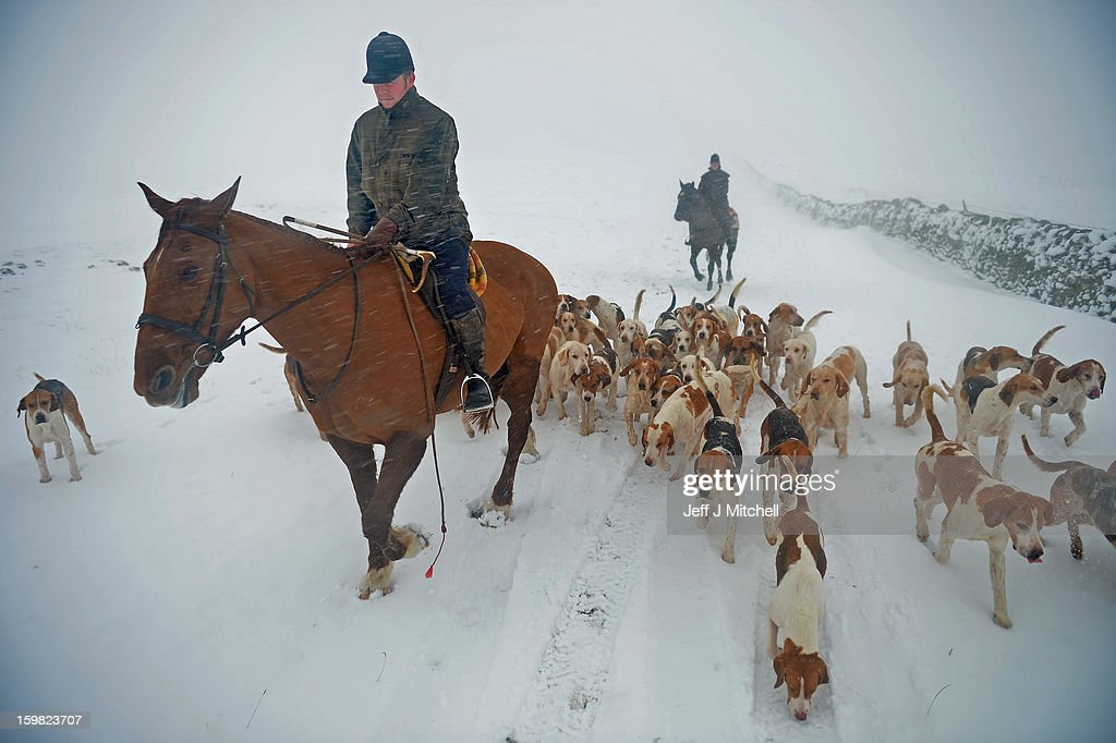 Huntmaster Tim Coulson at the Lauderdale Hunt exercises the hounds in the snow at Scarce Law on January 21, 2012 in Lauder, Scotland. Widespread snowfall is affecting most of the UK with school closures and transport disruption. The Met Office has issued a red weather warning for parts of Wales, advising against all non-essential travel as up to 30cm of snow is expected to fall in some areas today.