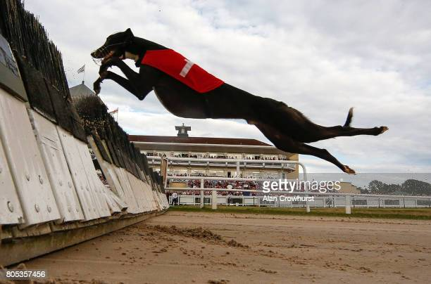 Hurdle race action at Towcester greyhound track on July 1 2017 in Towcester England