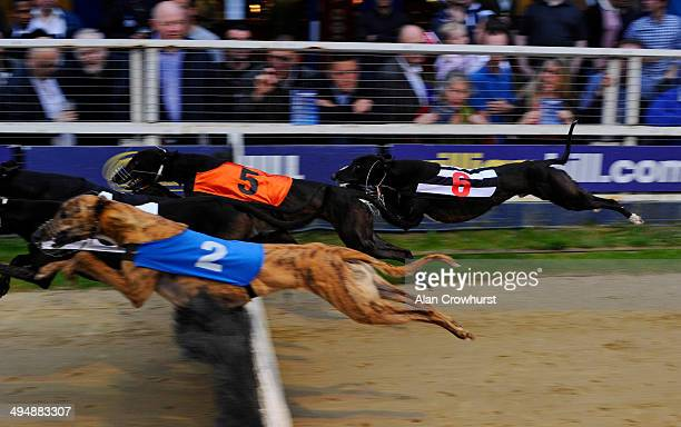 Hurdle racing at Wimbledon Stadium on May 31 2014 in Wimbledon England