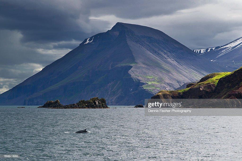 Husavik whale watching Iceland